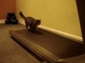 O novo exercício dos gatos domésticos