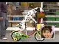 Cão anda de Bicicleta