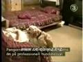 Cachorrinho Assanhado