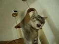Gatos: Febre de brincadeira