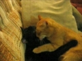 O S. Valentim dos gatos