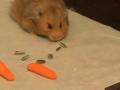 Hamster aspirador