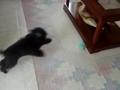 Lucky atacando e fugindo do brinquedo