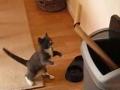 Gato Pugilista: Round 2