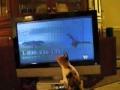 Como apanhar a ave da TV?